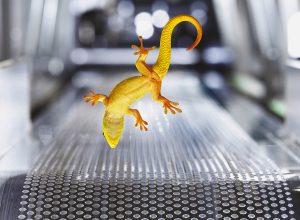 Conoce al gecko de Clariant
