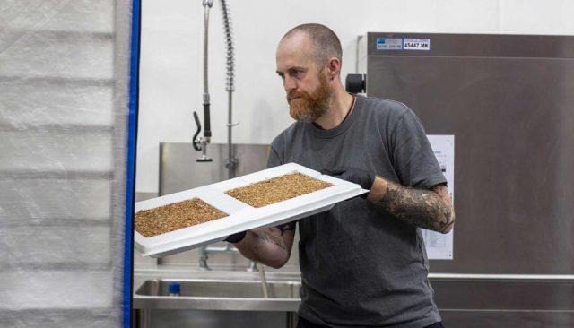 Magical Mushroom Company produce envases hechos con hongos