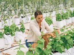 Beneficios de la tecnología en Agricultura 4.0